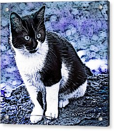 Acrylic Print featuring the photograph Blue Hindy by Selke Boris