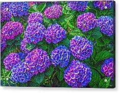 Acrylic Print featuring the photograph Blue Hydrangea by Hanny Heim