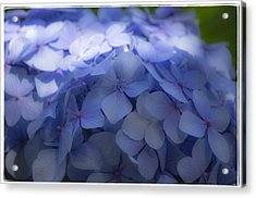 Acrylic Print featuring the photograph Blue Hydrangea One by Craig Perry-Ollila