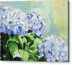 Blue Hydrangeas Acrylic Print by Elizabeth  McRorie
