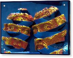 Blue In The Face Acrylic Print by Jack Gannon