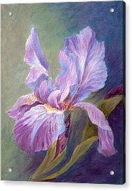 Blue Indigo Iris Acrylic Print