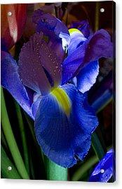 Blue Iris Acrylic Print by Joann Vitali