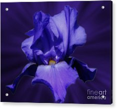 Blue Iris Acrylic Print by Smilin Eyes  Treasures