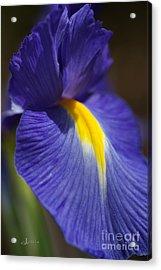 Blue Iris With Yellow Acrylic Print