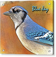 Acrylic Print featuring the photograph Blue Jay by A Gurmankin