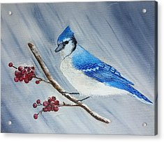 Blue Jay Acrylic Print by Valorie Cross