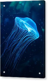 Blue Jelly Acrylic Print