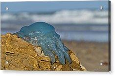 Blue Jellyfish 02 Acrylic Print