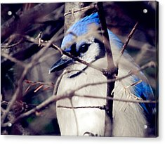 Acrylic Print featuring the photograph Blue Joy by Zinvolle Art