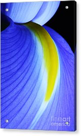 Acrylic Print featuring the photograph Blue by Judy Whitton