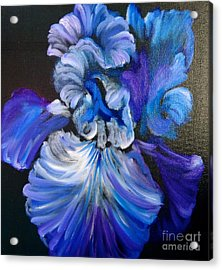 Blue/lavender Iris Acrylic Print by Jenny Lee