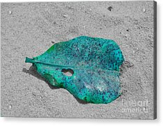 Blue Leaf Acrylic Print by Michelle Meenawong