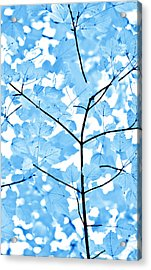 Blue Leaves Melody Acrylic Print by Jennie Marie Schell