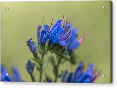 Acrylic Print featuring the photograph Blue by Leif Sohlman