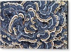 Blue Lichens Acrylic Print