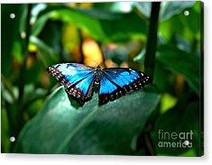 Blue Lit Butterfly Acrylic Print