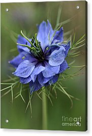 Acrylic Print featuring the photograph Blue Love by Joy Watson