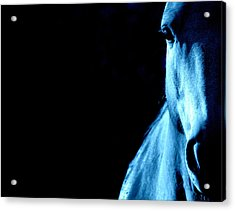 Blue Majesty.. Acrylic Print