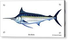 Blue Marlin Acrylic Print by Charles Harden