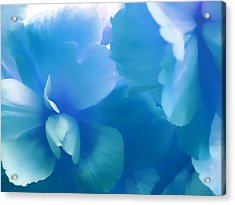 Blue Melody Begonia Floral Acrylic Print by Jennie Marie Schell