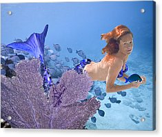 Blue Mermaid Acrylic Print by Paula Porterfield-Izzo