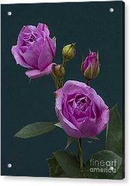 Blue Moon Roses Acrylic Print by ELDavis Photography