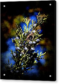 Blue Nature Acrylic Print by Milena Ilieva