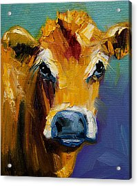 Blue Nose Cow Acrylic Print