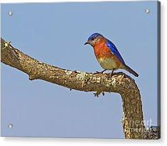 Blue On Blue Acrylic Print by Gary Holmes