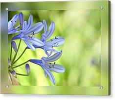 Blue On Green Acrylic Print