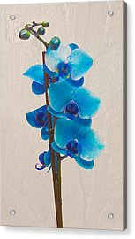 Blue Orchid Acrylic Print
