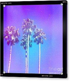 Blue Palms Acrylic Print
