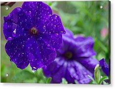Blue Pansies After A Rain Acrylic Print