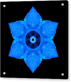 Acrylic Print featuring the photograph Blue Pansy II Flower Mandala by David J Bookbinder