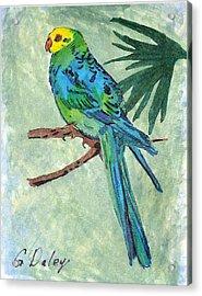 Blue Parakeet Acrylic Print by Gail Daley