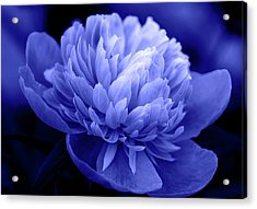Blue Peony Acrylic Print by Sandy Keeton