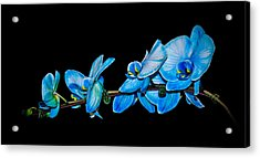 Acrylic Print featuring the photograph Blue Phalaenopsis Orchid by Len Romanick