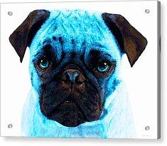 Blue - Pug Pop Art By Sharon Cummings Acrylic Print by Sharon Cummings