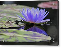 Blue Purple Dreams Acrylic Print by Suzanne Gaff