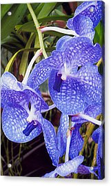Blue Rapture Acrylic Print by Barb Baker