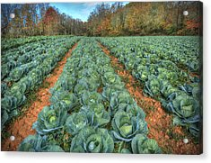 Blue Ridge Cabbage Patch Acrylic Print