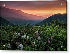 Blue Ridge Morn With Rose Bay Rhododendron  Acrylic Print by Rob Travis