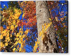 Acrylic Print featuring the photograph Blue Ridge Parkway Fall Foliage-north Carolina by Mountains to the Sea Photo