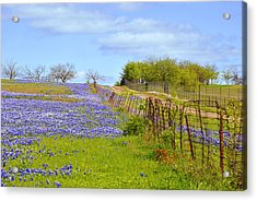 Blue Road Up A Hill Acrylic Print by ARTography by Pamela Smale Williams