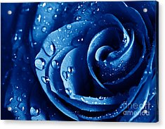 Blue Roses Acrylic Print by Boon Mee