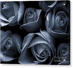 Blue Roses Acrylic Print by Diane Diederich