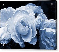 Blue Roses With Raindrops Acrylic Print by Jennie Marie Schell