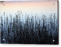 Blue Shadow  Acrylic Print