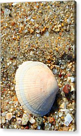 Acrylic Print featuring the photograph Blue Shell by Dick Botkin